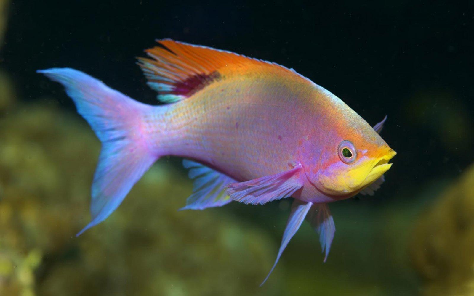 Resultado de imagen de peces infomascota