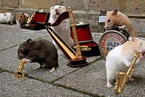 Enriquecimiento para los roedores: cómo tener una mascota feliz y saludable