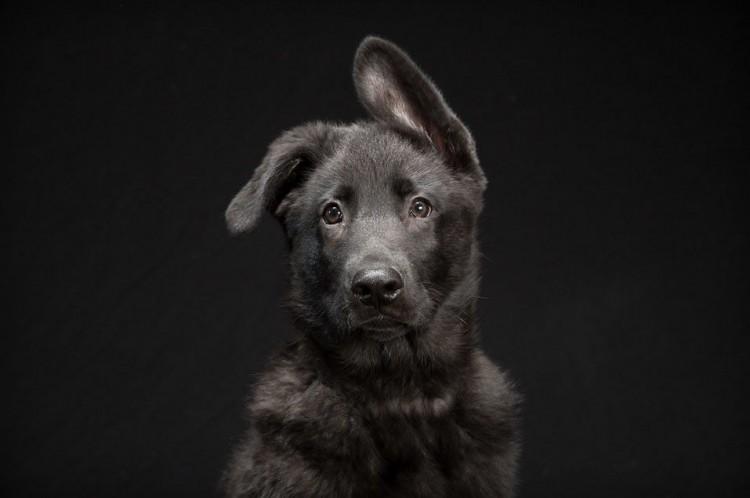 Cuatro juegos para estimular el oído del perro