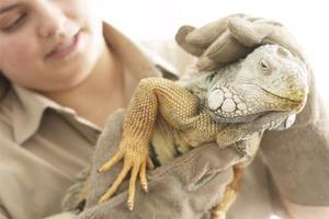 Manejo de los reptiles