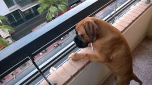 El perro o gato paracaidista