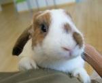 Conejos: Enfermedades de la piel