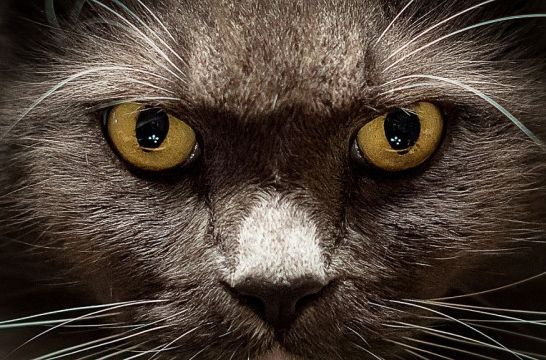 ¿Cómo ven los gatos? Siete misterios que debes conocer