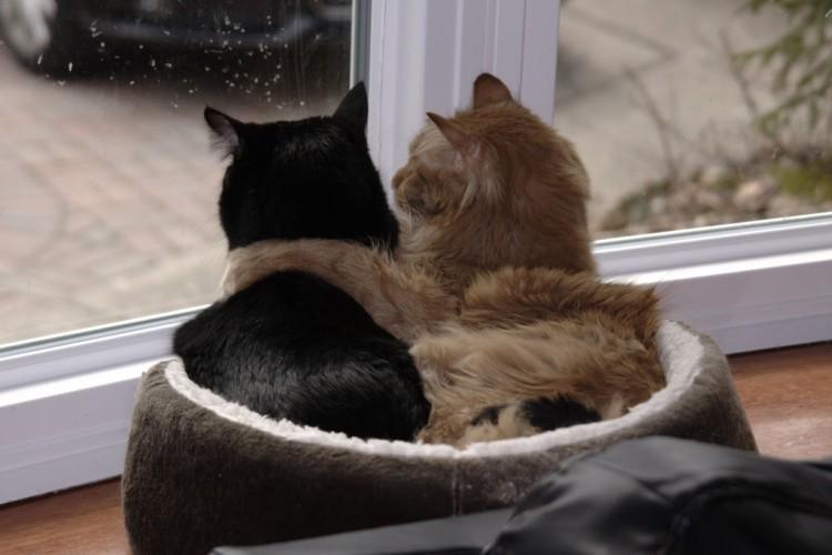 Seis pasos para proteger las ventanas para tu gato