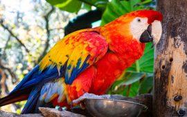 Aves: necesidades nutricionales en las psitácidas