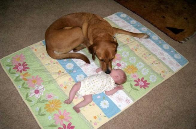 Perro y bebé: cómo conseguir una buena aceptación