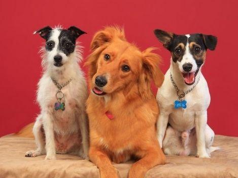Perros y gatos cuidan de tu salud mental: amigos peludos con beneficios