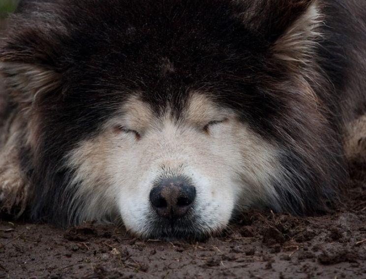 Perros mal olor