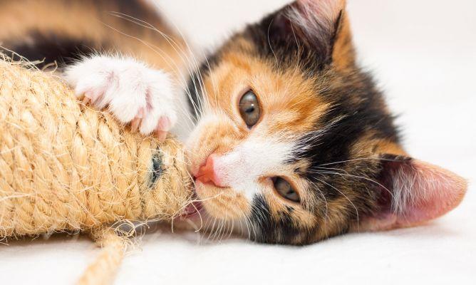 ¿Qué es un rascador para gatos?