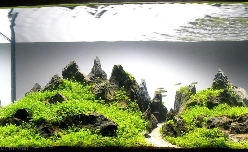 Mantenimiento y decoración del acuario