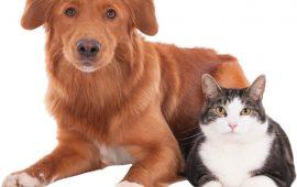 La alergia en perros y gatos