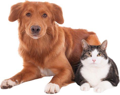 Alergia en perros y gatos