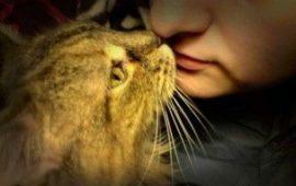 El ronroneo del gato que te engatusa