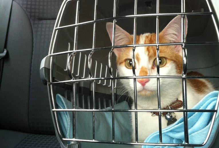 Viajar con gatos en coche esta Semana Santa