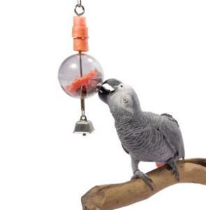 Aves: Enriquecimiento ambiental, los juguetes