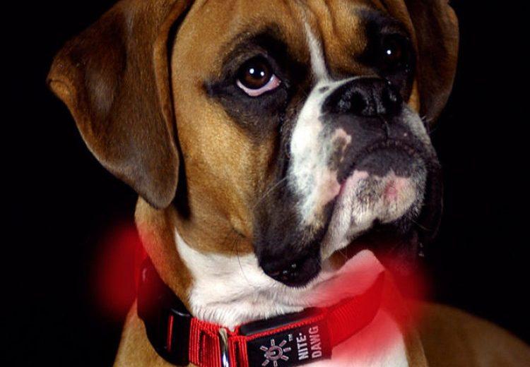 Un veterinario en el collar del perro
