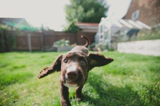 ¿Pasea su perro sin correa? Atención a la multa que puede recibir