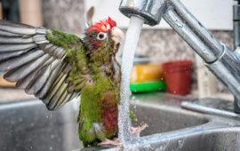 El baño en las aves