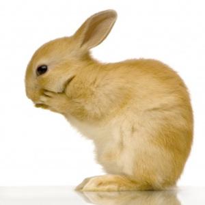 Conejos: Bolas de pelo