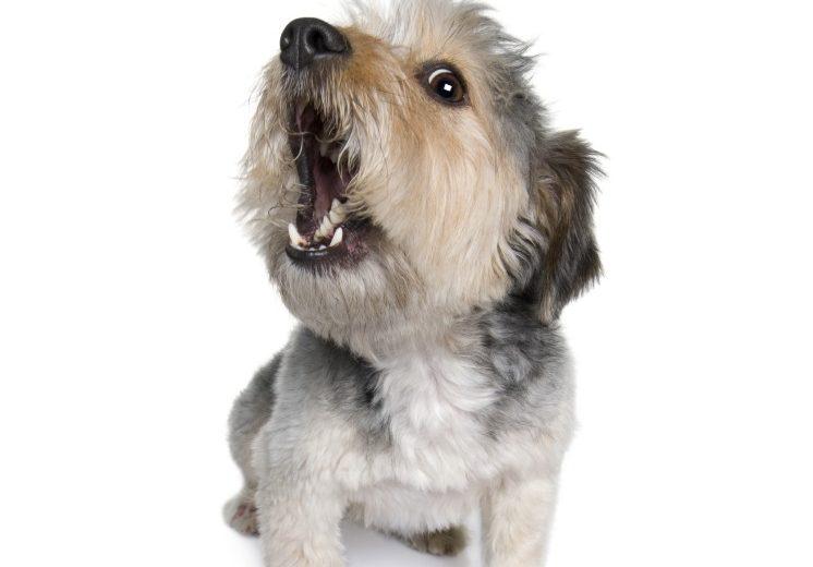 ¿Su perro es pesimista u optimista? Averiguarlo reducirá su estrés