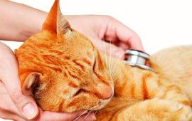 La situación del IVA a los servicios veterinarios de animales de compañía