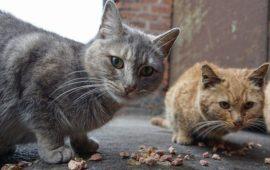 Gandia pone en marcha el Plan de Gestión de Colonias Felinas