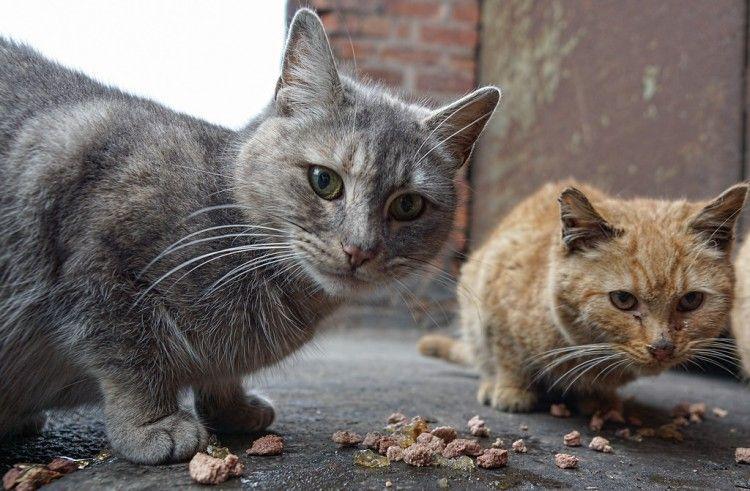 El Manifiesto Felino en defensa de los gatos callejeros entra en el Congreso
