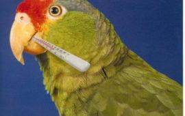 Cómo detectar que un ave está enferma