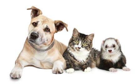 Campaña de vacunación antirrábica a animales 2015, perros, gatos, hurones