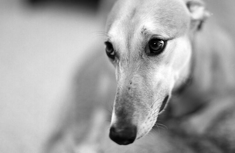 Los mejores documentales sobre perros