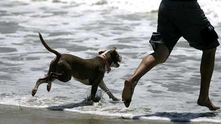 Enseñar al perro a nadar, ¿cómo se hace?