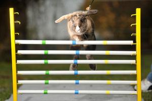Cómo adiestrar a tu conejo