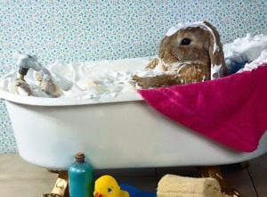 Una advertencia sobre los baños en conejos ¿son seguros?