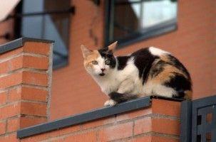Microchip para gatos, felinos imperdibles