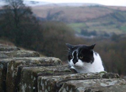 ¿Qué hacen los gatos cuando no les vemos?