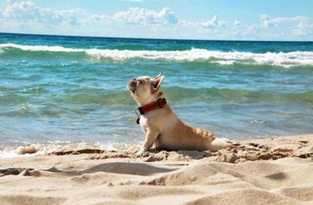 Perros en la playa: cómo divertirse sin peligro