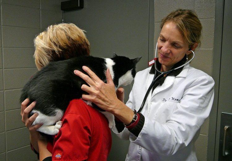 Cómo bajar el IVA veterinario protege a perros y gatos