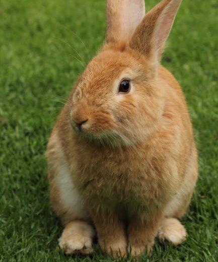 Conejos: Cómo entrenarle a orinar y defecar