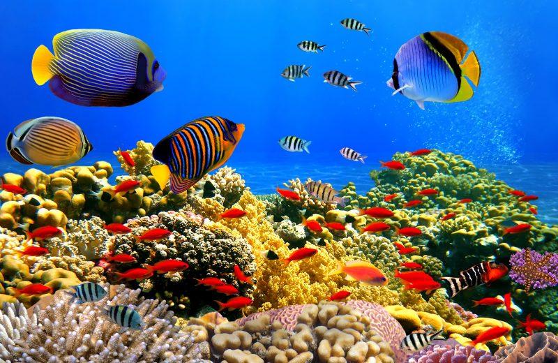 Cómo evitar que un pez se muera mientras estás de vacaciones