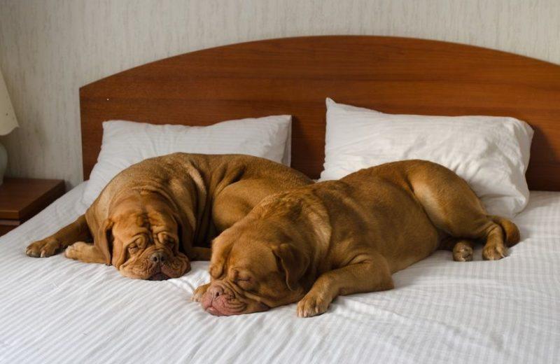 Cinco de los mejores hoteles para perros y gatos del mundo