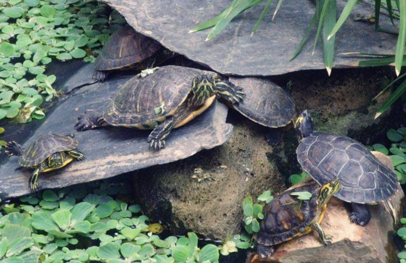 Reunión responsables estación de Atocha y Adif para solucionar el tema de las tortugas