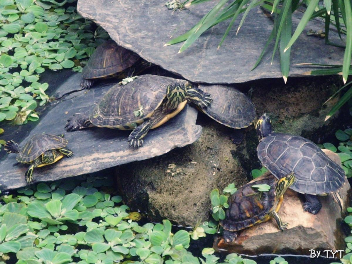 Qu est ocurriendo en el estanque de atocha de madrid for Estanque artificial para tortugas