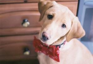 Perros que sufren cuando se quedan solos en casa, ¿qué hacer?