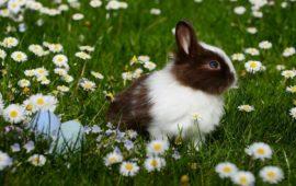 Conejos: Corregir comportamientos destructivos