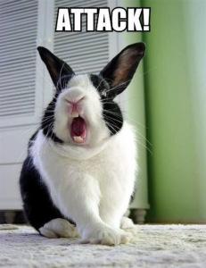 Conejos: Comportamientos no deseados