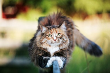 ¿Por qué no hay que amputar las uñas al gato?