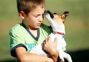 El moquillo en el perro: cuatro preguntas con respuesta