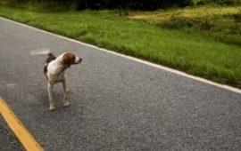Perros abandonados: ¿qué hacer si me encuentro uno?