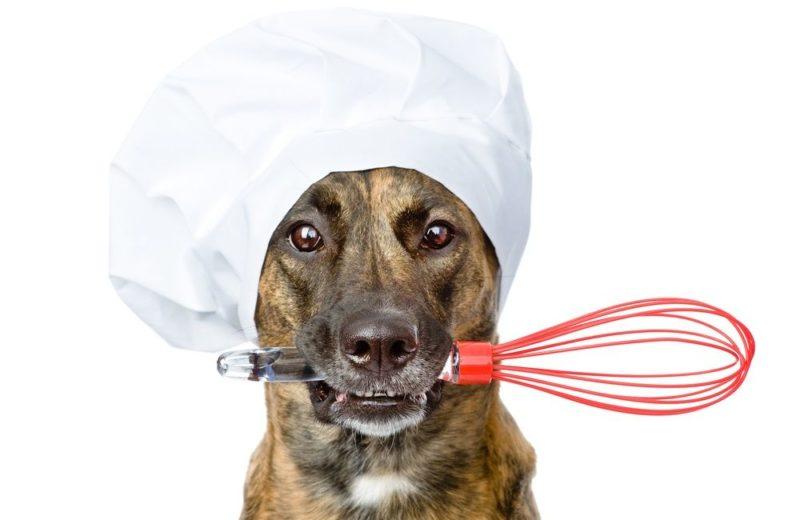 Tres recetas de comida casera para perros: ¡ricas y sanas!