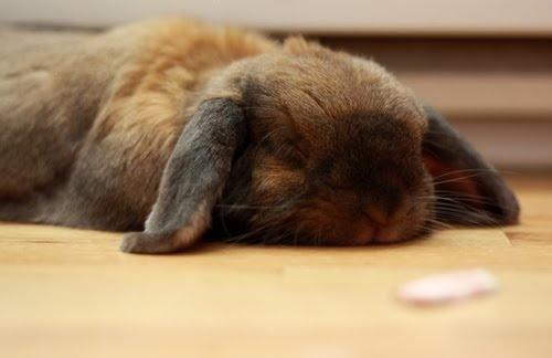 Conejos: El hígado (2'parte) Enfermedades Hepáticas